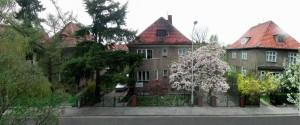 Przepiękna magnolia wskazuje drogę