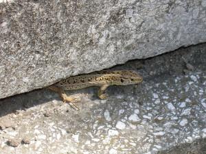 Nawet mała jaszczurka, chuchając w poparzone łapki, schowała się pod kamień.